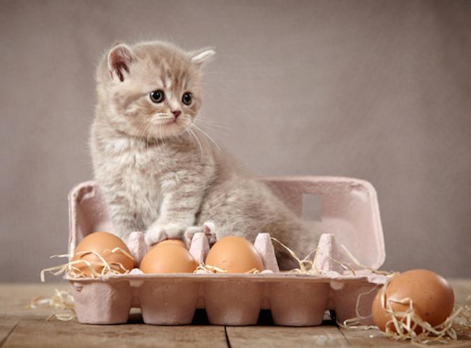 easter-cat-eggs